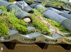 Moss on roof